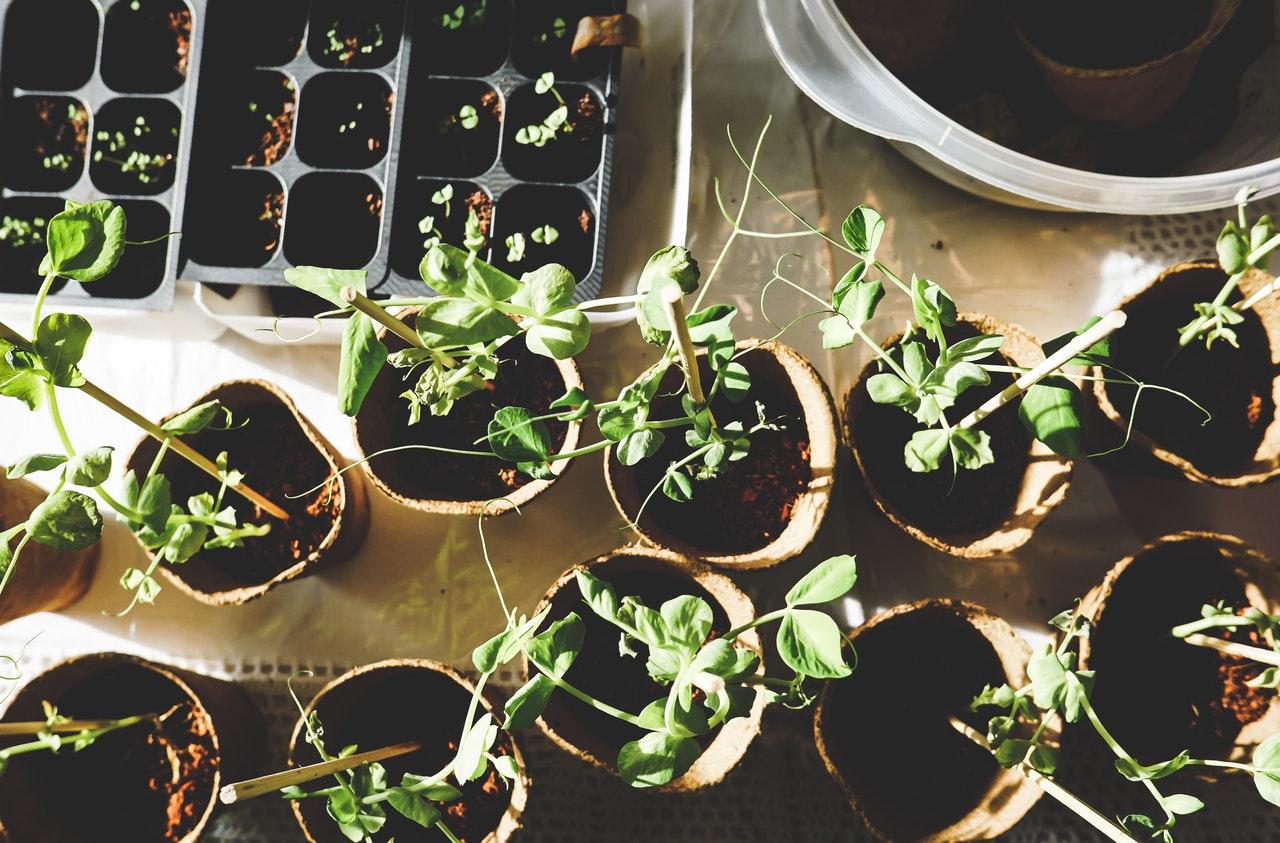 Les systèmes de multiplication des plantes potagères