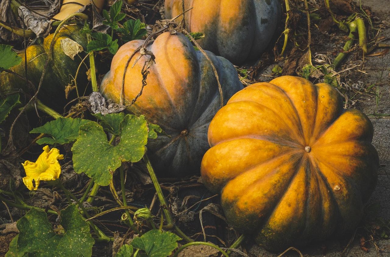 Récolter les fruits et légumes du potager