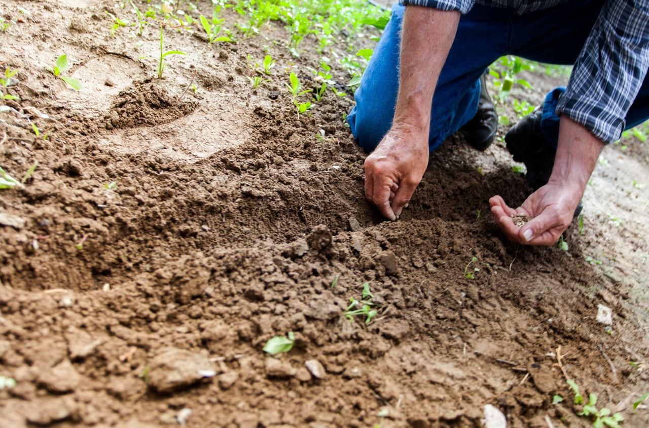 Cultiver son potager : les étapes incontournables