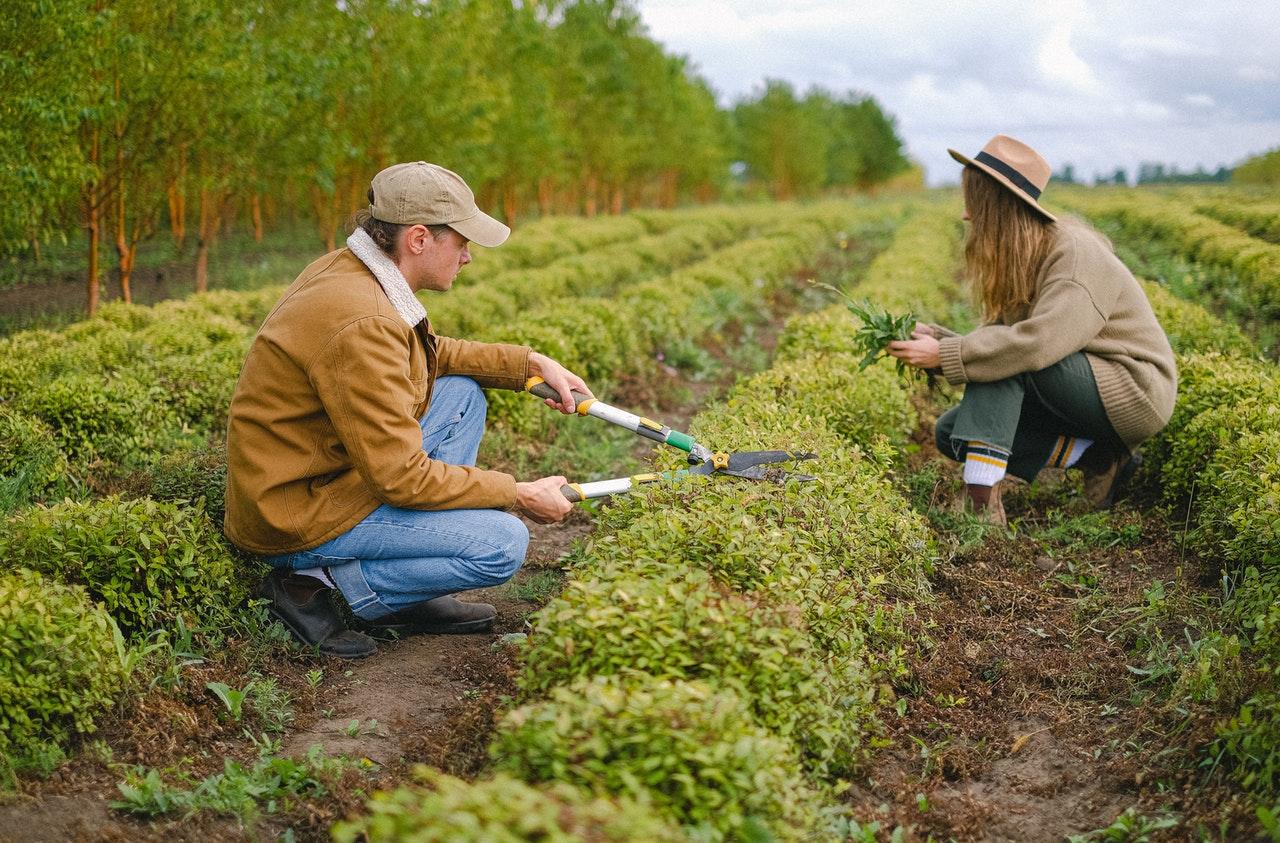 Comment tailler les plantes potagères ?