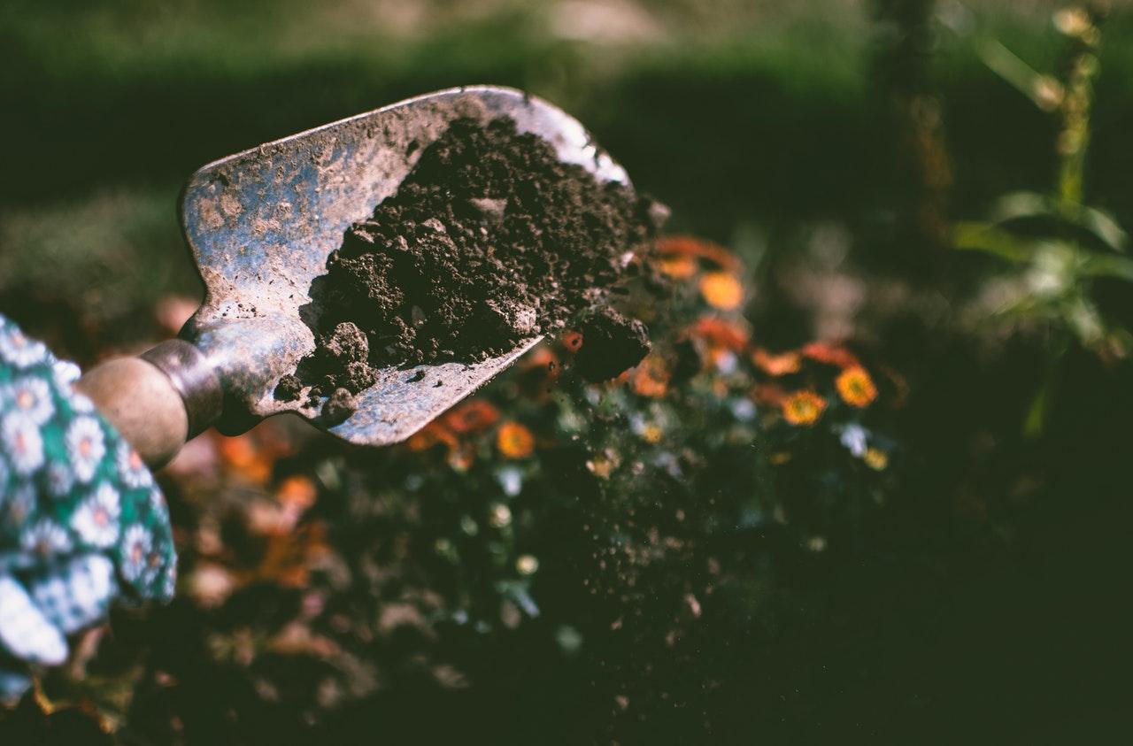 Potager en permaculture : les bonnes techniques à suivre