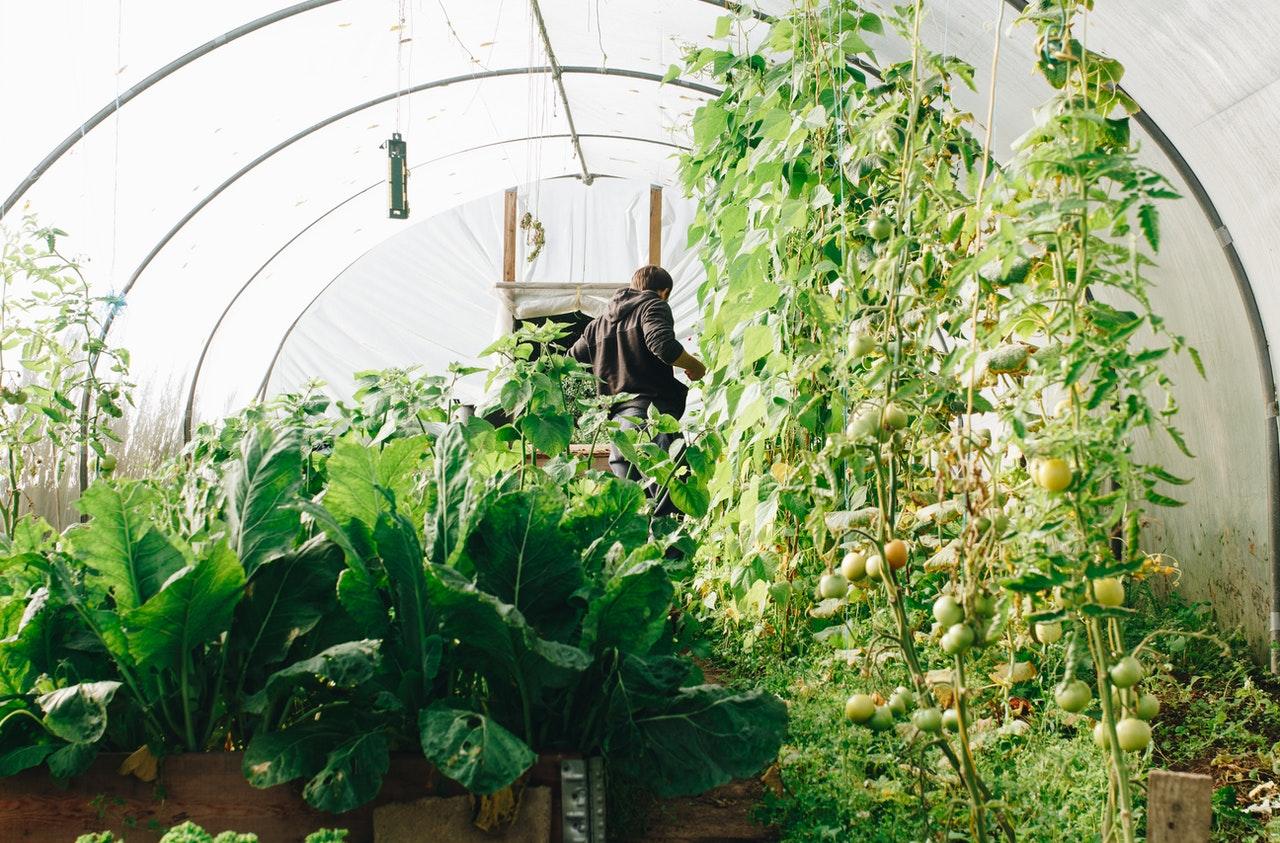 Comment faire un association efficace de plantes dans le potager ?